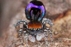 These Newly Discovered Spiders Are Actually Really Beautiful