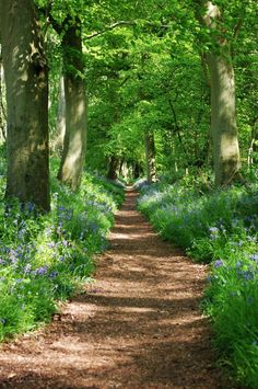 Wallingford, England, beautiful country path through the forest; Country Landscaping, Walk In The Woods, Parcs, English Countryside, Pathways, Belle Photo, The Great Outdoors, Landscape Photography, Forest Photography