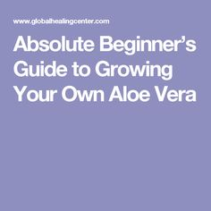 Absolute Beginner's Guide to Growing Your Own Aloe Vera