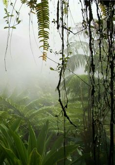 all over jungle Nature Landscape, Tropical Forest, Amazon Rainforest, Parcs, Beautiful Landscapes, Mother Nature, Mists, Beautiful Places, Scenery