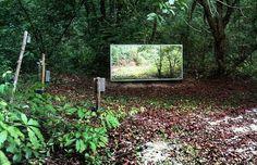 Colocan un Espejo en el Bosque  Miren Cómo Reaccionan los Animales