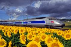 RECESSION or no, France is pushing ahead with the extension of its high-speed rail network. The biggest of the three projects currently under way is the new line between Tours (where the TGV heading south from Paris stops running and starts crawling) and Bordeaux halfway down the Atlantic coast.