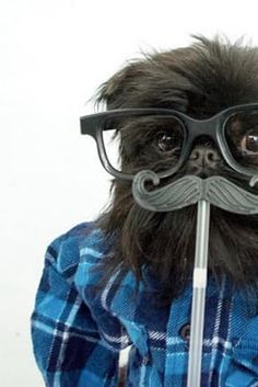 28 Ways to Dress Up Your Dog This Halloween via @PureWow