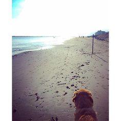 I momenti di riflessione migliori,  sono quelli in cui davanti abbiamo solo il mare. #withmydog #mytherapy #seatherapy #mare #mareterapia #rimini #walking http://blog.fmcarsrl.com/wp-content/uploads/2016/10/14701251_348822422127812_8082866475246813184_n.jpg http://blog.fmcarsrl.com/index.php/2016/10/16/i-momenti-di-riflessione-migliori-sono-quelli-in-cui-davanti-abbiamo-solo-il-mare-withmydog-mytherapy-seatherapy-mare-mareterapia-rimini-walking/