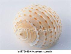 Objeto, mar, concha