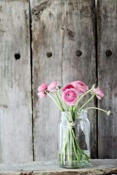 Roze ranonkels in jampot