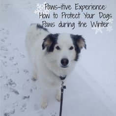 How to Protect Your Dogs Paws from the Winter Salt