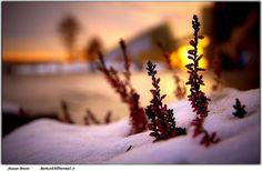 Snow | Flickr - Photo Sharing!
