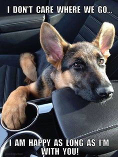 So sweet and so true. German Shepherds are humans' best friends!