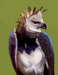 Harpy Eagle by Dayinthesky