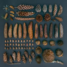 Emily Blincoe, a photographer from Austin, Texas, creates beautiful, colorful and soothing photos of everyday objects by arranging them into neat and orderly collections based on size, shape and color.