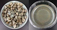 Washing Clams 現在人們的飲食越來越多樣化,其中蛤蜊等貝類海鮮,以其獨特的風味和鮮美的味道,備受人們喜愛。蛤蜊蒸蛋、九層塔炒蛤蜊、辣炒蛤蜊等,也成了人們的必吃清單,活躍在大家的餐桌上。