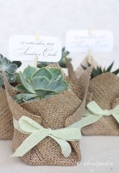 Suculentas: Un souvenir para toda la vida . Wedding Gifts For Guests, Wedding Favors Cheap, Wedding Favours, Diy Wedding, Wedding Flowers, Party Favors, Green Wedding, Wedding Ideas, Succulent Wedding Favors