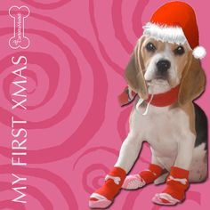 A while ago, I was traveling fromBeagle Etruriato Sicily to be welcome in my new family. I am very lucky because Ifind lovely humans and pets.I wish that for this Christmas a lot of puppies and homeless dogs may find warm shelters and cosy homes. Here you can have details about myexperiencefrom the kennel to...