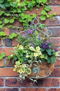 フローラのガーデニング・園芸作業日記-アンゲロニア ヘリオトロープ 寄せ植え