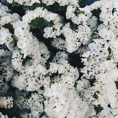 biacofee: ✨✨#vscocam #vscogrid #vsco_allshots #vsconature #vscogood #vscogoodshot #igersportugal #igers  #portugaldenorteasul #igerseurope #livefolk #august #light #white #liveauthentic #summer #flowers #flowerstalking #nature_collection #naturelovers #flowerstagram