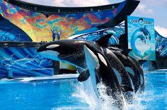 Medida ainda não agrada entidades defensoras dos animais, que gostariam de ver as orcas livres .