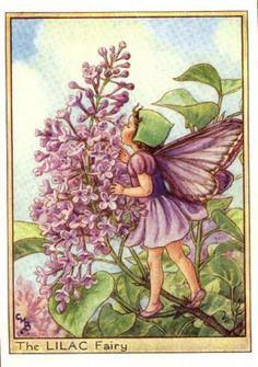 Lilac Flower Fairy print c. 1950 Fairies by Cicely Mary Barker