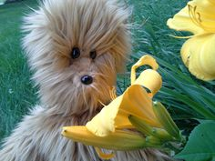 Wookiee the Chew plush puppet by JoyFilledPuppets on Etsy