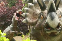 Triceratops looking a wee bit worried