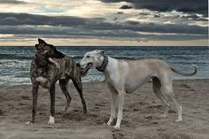 Beautiful dogs and beach setting. #dogs #animals #pets #ocean