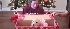Watch This Definitive Proof That Puppies Are The World's Best Gifts - too cute for words . . . I was crying after watching (-: