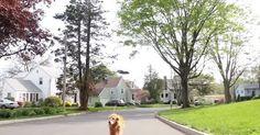 Des drones pour les chiens | Drone Trend