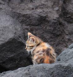 A Lonely Kitten