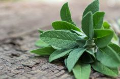 Sage or Salvia Officinalis comes from the Latin word salvere, which means to be in good health. Sage Benefits, Health Benefits, Herbal Remedies, Home Remedies, Holistic Remedies, Natural Remedies, What Is Sage, Supplements For Diabetes, Medicinal Plants