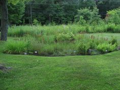 You can see the grading, form, and construction of a large rain garden. Ignore the plants - these could be prettier. Native Gardens, Rain Garden, Construction, Gardening, Canning, Building, Pretty, Plants, Pictures