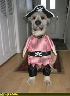 Dog Pirate Costume.  Bob would look so cute in this.