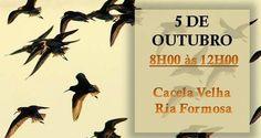 Aves de Cacela Velha no fim de semana do EuroBirdwatch 2014! | Algarlife