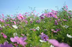 Top tips for planting a wildflower garden.