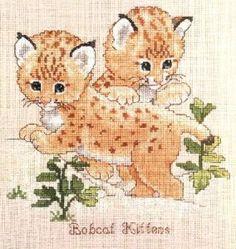 baby bobcat kittens 1