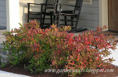 Garden Sense: Fall Color - Shrubs