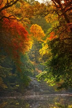 No Words Forum: In anticipation of autumn (Landscape Photography) Landscape Photography, Nature Photography, Autumn Scenes, Fall Pictures, Beautiful Landscapes, The Great Outdoors, Beautiful Pictures, Scenery, Natural Beauty
