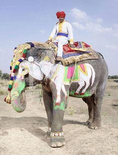 Фестиваль слонов в Джайпуре. Фото: Чарльз Фреджер (Charles Freger)