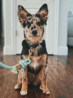 Before You Return That Rescue Dog To The Shelter… – Dogtime - Welpen Cute Baby Animals, Animals And Pets, Funny Animals, Cute Dogs And Puppies, I Love Dogs, Doggies, Aussie Puppies, Pet Dogs, Mixed Breed Puppies