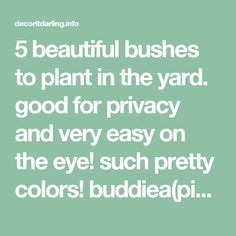 5 beautiful bushes to plant in the yard. good for privacy and very easy on the eye! such pretty colors! buddiea(pink),forsythia spectabilis(yellow), spirea arguta(white), ceanothus yankee point(blue), and weigelia(burgundy) - Decor It Darling