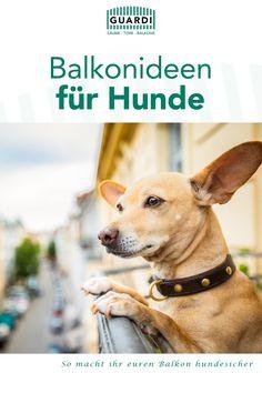 Balkon hundesicher machen? Wir zeigen euch wie's geht: DIY-Anleitung für ein Balkon Hundeklo, wichtige Tipps & Tricks und noch viel mehr. 🐶 #balkonidee #balkonideen #balkonhundesicher #balkonhundeklo #balkonideendiy Dogs, Animals, Dog Care, Diy, Tips, Animales, Animaux, Pet Dogs, Doggies