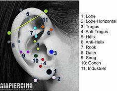 LES PRINCIPAUX PIERCINGS D'OREILLE. http://www.aiapiercing.com/blog #piercing…