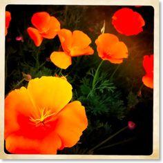 orange.  The darker shade is the new Pantone color of the year - Tangerine Orange.