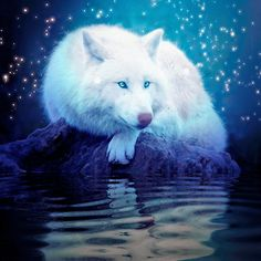 At Twilight a Beautiful White Wolf Lays in Ponder.