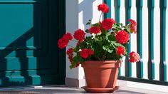 Como cuidar do jardim quando você viaja - Como cuidar do jardim quando você viaja
