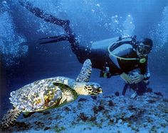 Scuba diving off Fernando de Noronha, Brazil...so beautiful it's unreal - considered one of the top 10 dive sites in the world