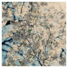 White Spring -  Fine Art Photograph