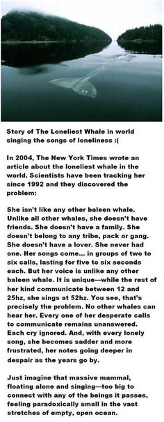 The Loneliest Whale. This story actually made me cry. It is so sad and cruel that this magnificently beautiful animal (a mammal just like us), is so alone and through no fault of her own, is destined to stay alone. Can't some scientist or whate lover do something to alter her call? God Bless her!
