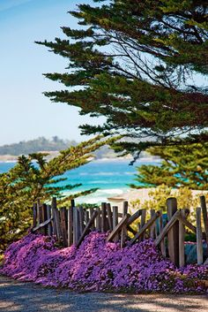 Carmel-by-the-Sea--very favorite place to visit  in California (one of my favorite childhood memories is visiting relatives here; and it looks the same, so many years later)