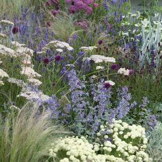 Plant list at link Low water drought tolerant perennial border featuring yarrow, catmint, drumstick allium, and variegated Iris pallida