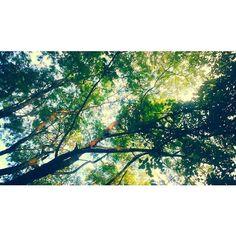 Looking Up Breath #paisagem #forest #trees #arvores #floresta #tardinha #sunset #landscape #styleoftheday #sustentabilidade #upcycle #nature #inspiration #modasustentavel #slowfashion #ecofashion #фото #consumoconsciente #nachhaltigkeit #breath #ethicalfashion #grüne #estilo #design #avantgardefashion #futuristicfashion #fashiondesign #brasil #photography #lifestyle by odyssee_br http://ift.tt/1XKTknT